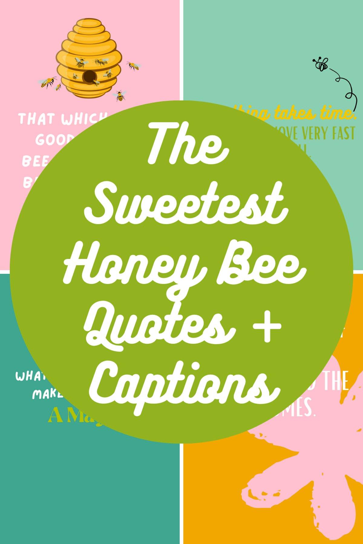 Sweet Honey Bee Quotes